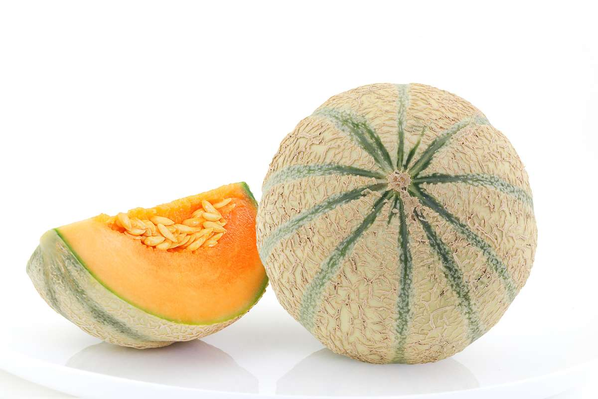 Melon charentais vert brodé BIO (calibre moyen), Maroc
