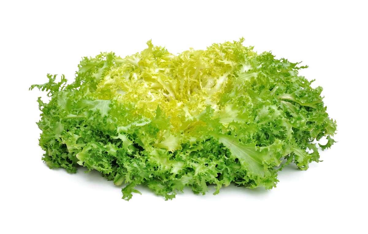 Salade frisée, Espagne