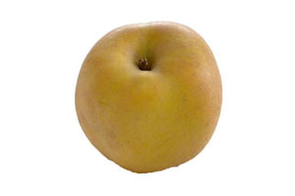 Pomme jaune Reinette grise du canada BIO (petit calibre), France
