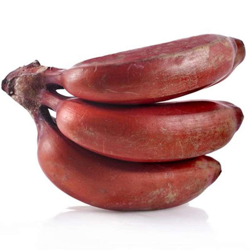 Banane rose (petit calibre), Équateur