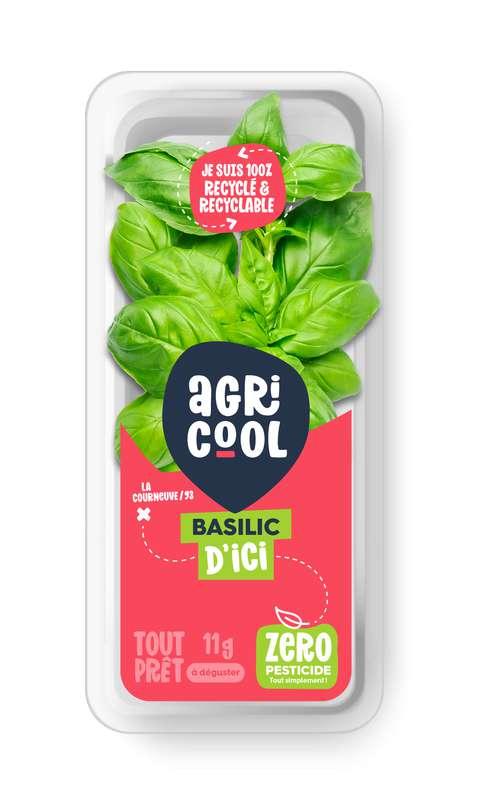 Basilic ultra-local et sans pesticides, Agricool, France