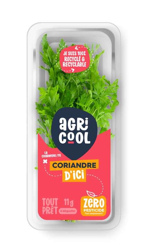 Coriandre ultra-locale et sans pesticides, Agricool, France