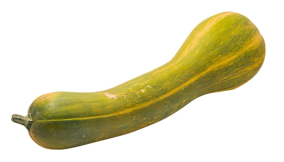 Courge longue de Nice BIO (200 à 400 g) (calibre moyen), France