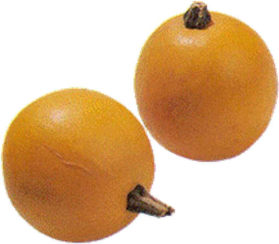 Courge pomme d'or BIO (de 130 à 200 g) (calibre moyen), France