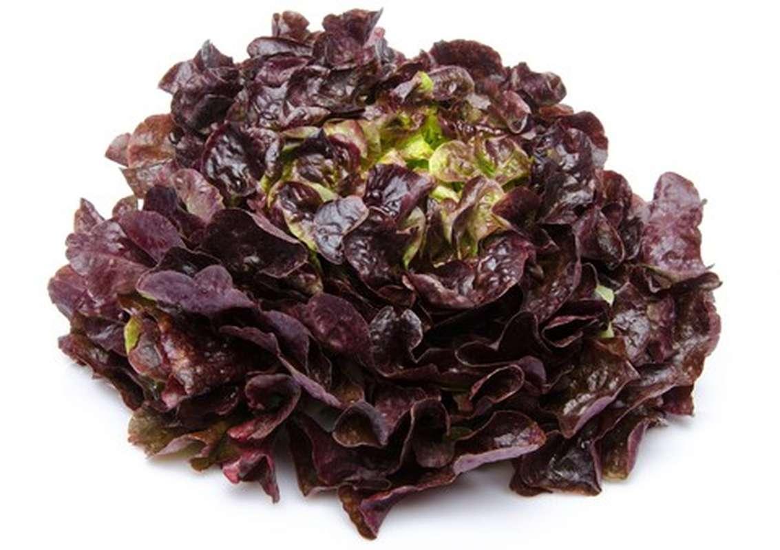 Salade feuille de chêne rouge BIO, France