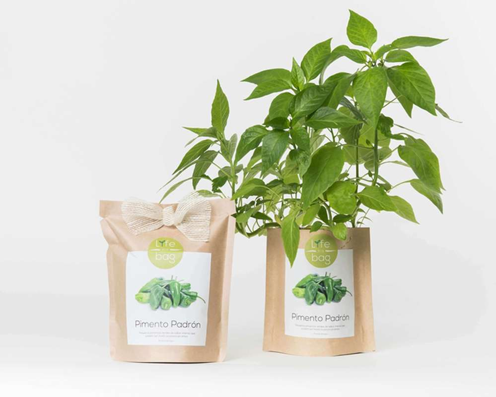 Grow Bag Piments Padron, Life In a Bag (300 g)