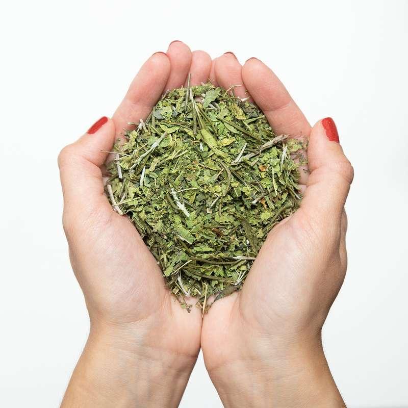 Infusion L'Herbale, Maison Sauge (x 15 sachets)