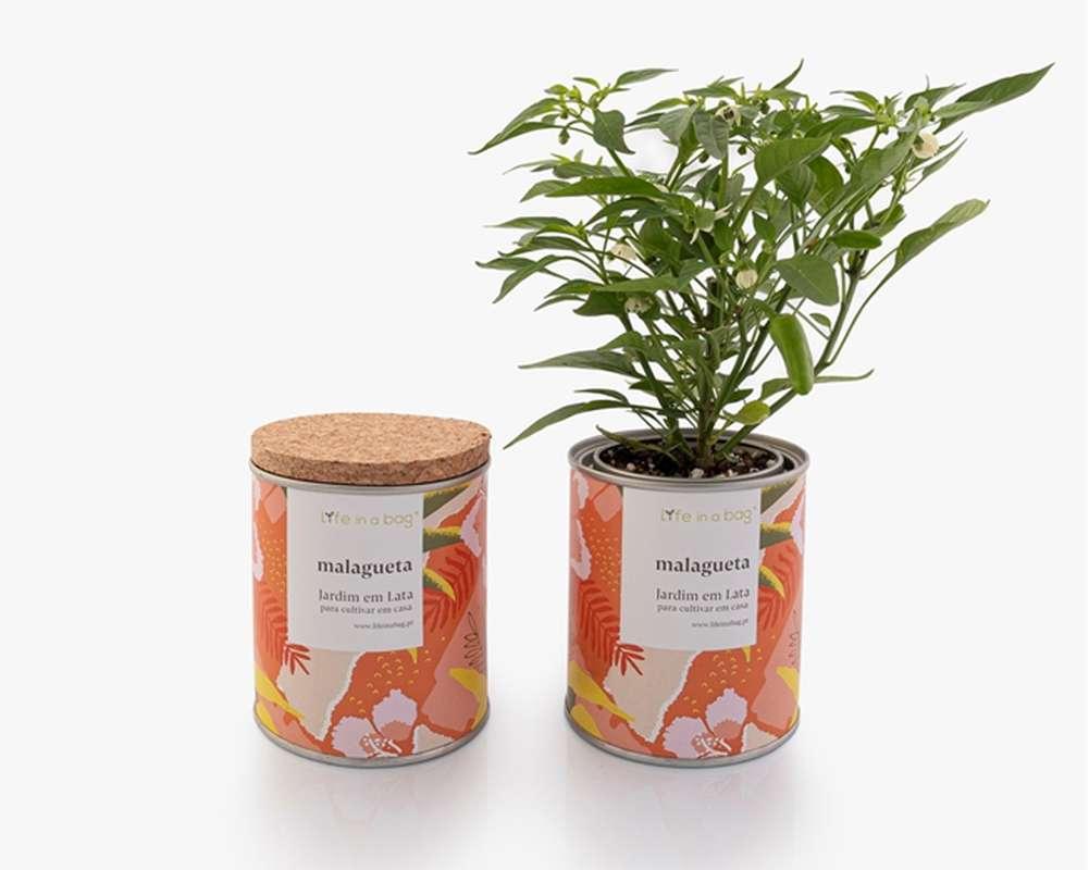 Jardin en boîte Modern Piments, Life In a Bag (210 g)