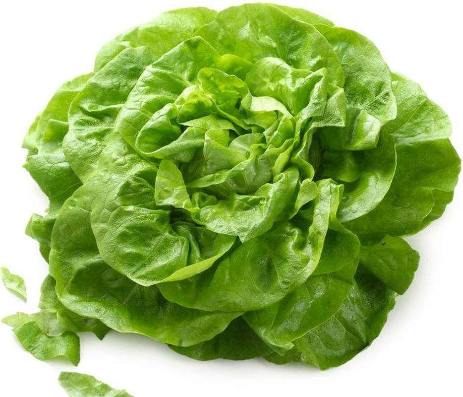 Salade laitue BIO, France