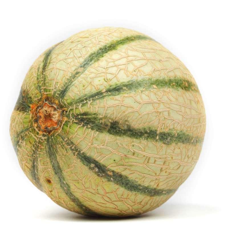 Melon charentais jaune brodé BIO (petit calibre), France