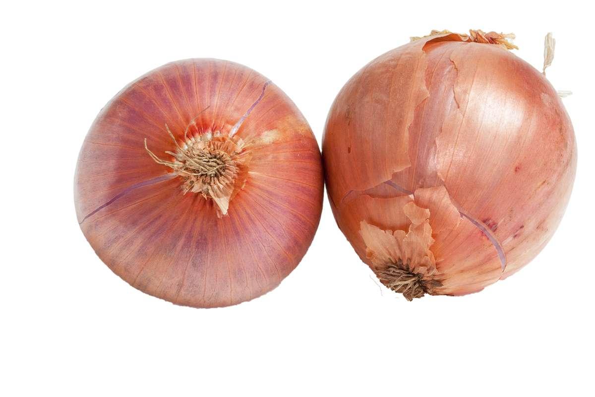 Oignon rose de Bretagne BIO (très petit calibre), France
