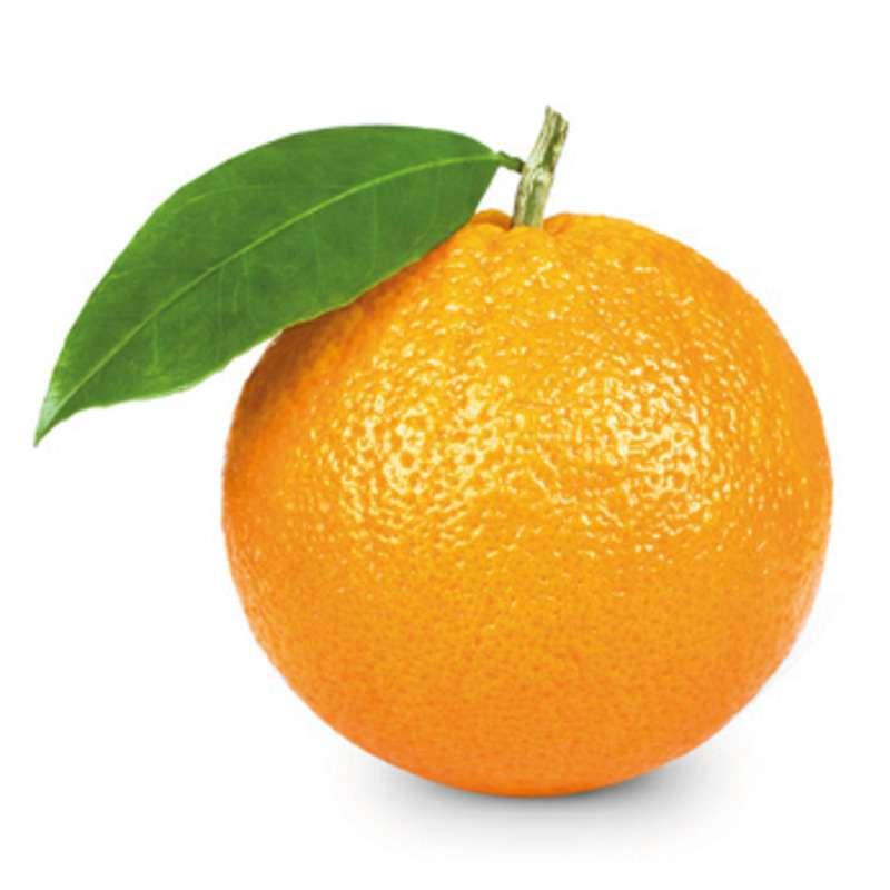 Orange de table BIO (calibre moyen), Afrique du Sud