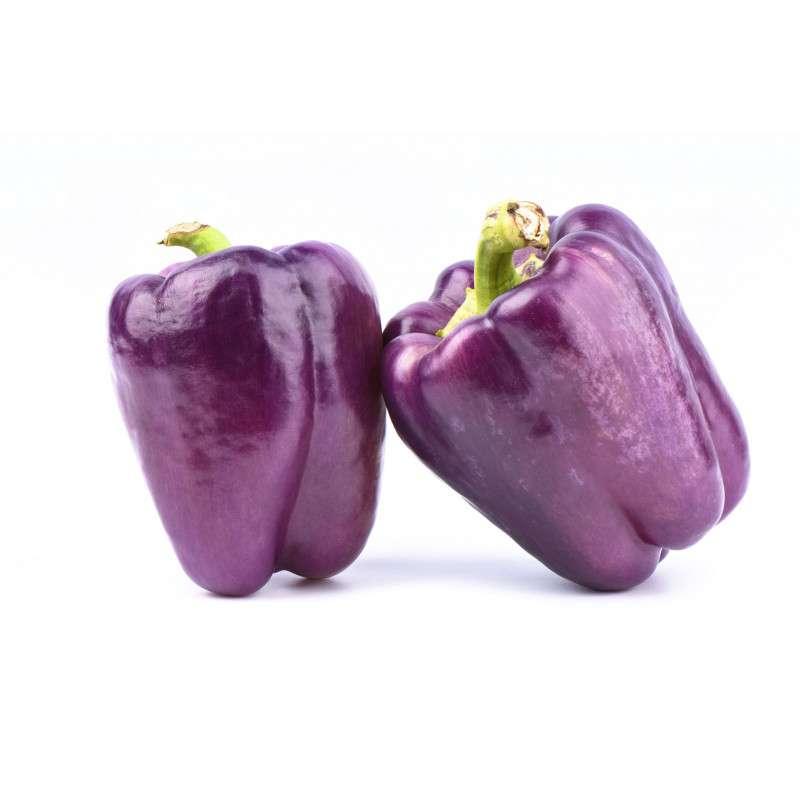 Poivron violet BIO (petit calibre), France