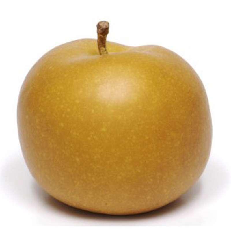 Pomme Canada (calibre moyen), France