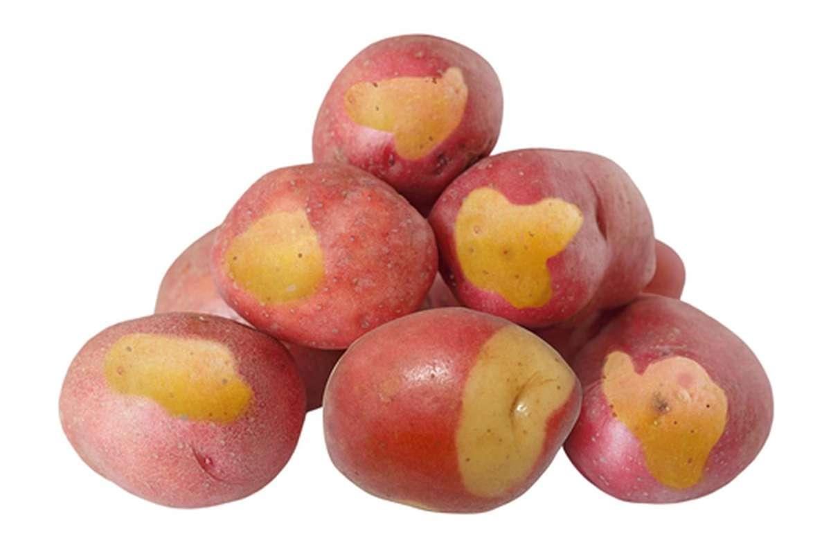 Pomme de terre Oeil de Sologne (aussi appelée Oeil de Perdrix), France