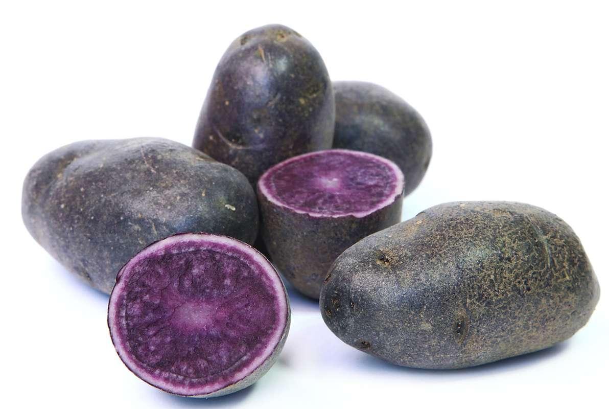 Pomme de terre Truffine (purple majesty), France
