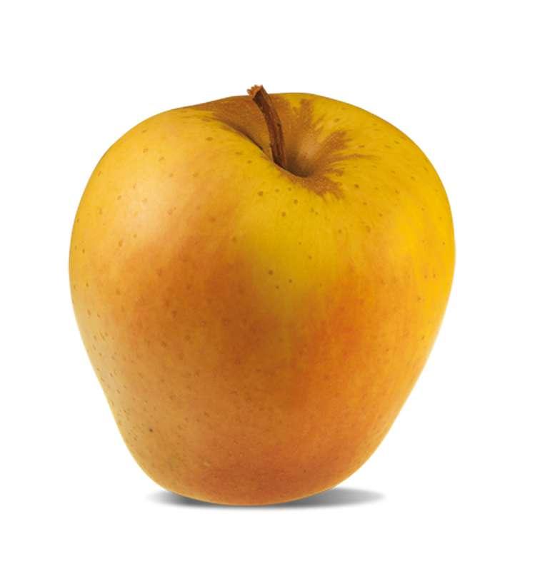 Pomme Golden Rosée extra (gros calibre), France