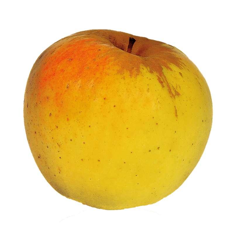 Pomme jaune Opal BIO (petit calibre), France