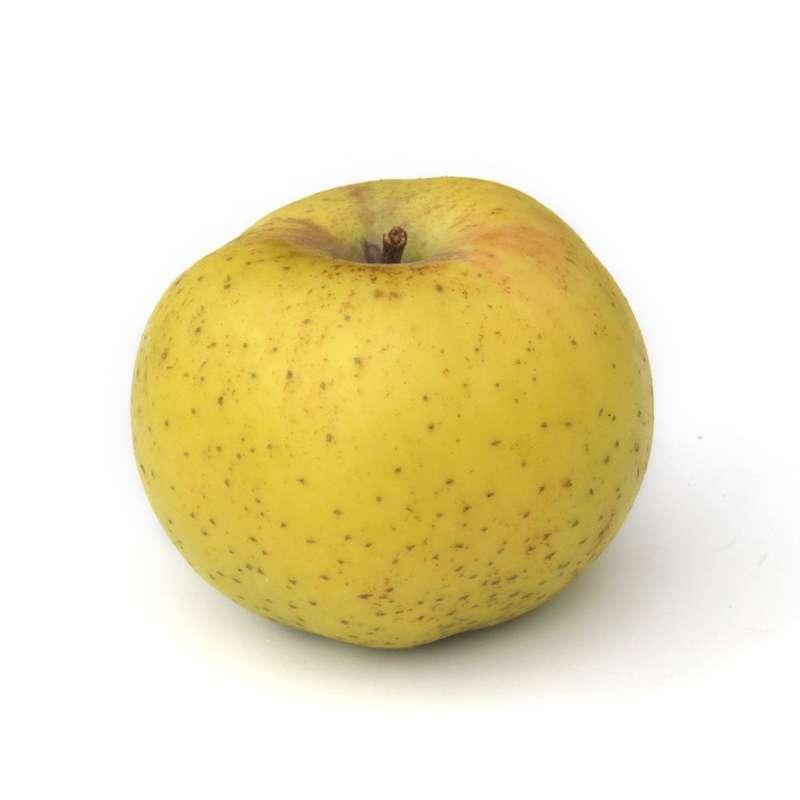 Pomme Reinette d'Armorique (calibre moyen), France