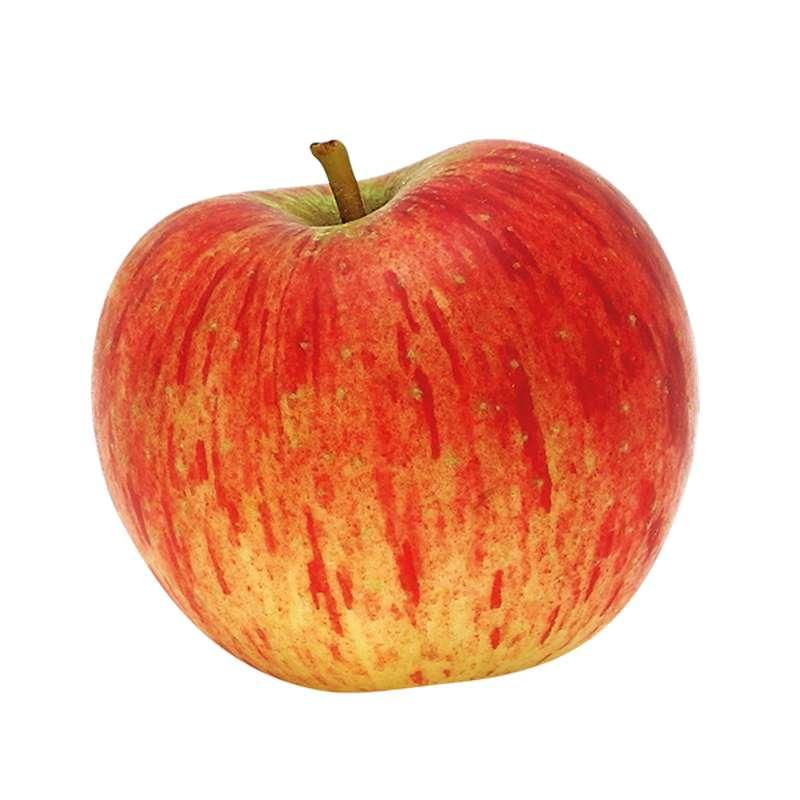Pomme Reine des reinettes DEMETER BIO (petit calibre), France