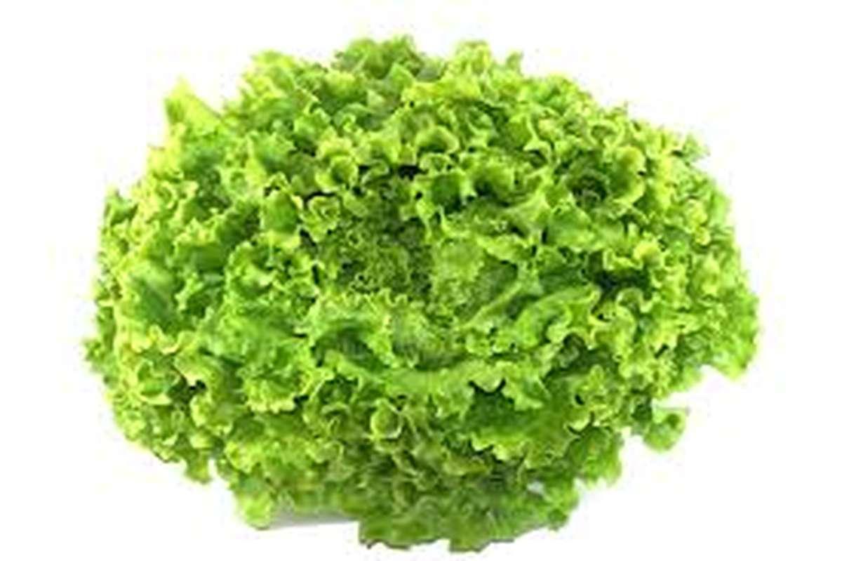 Salade batavia, France