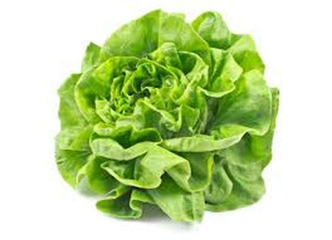Salade laitue locale Ile-de-France, France