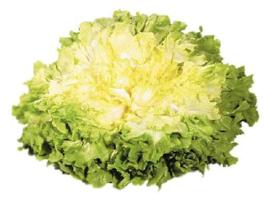 Salade scarole, France