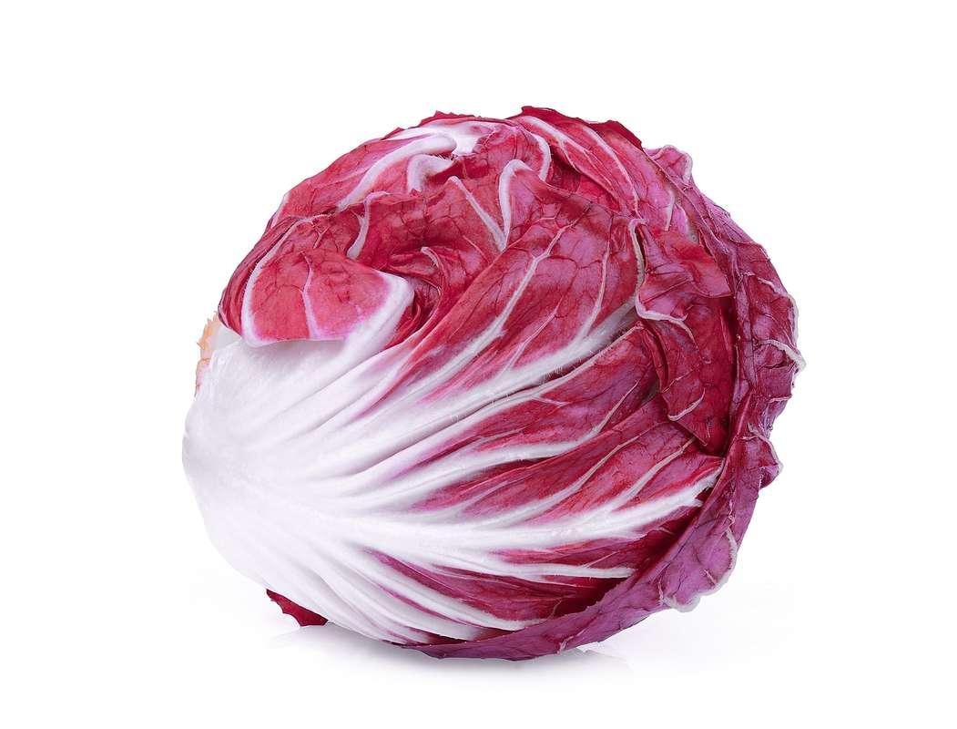 Salade trévise (petit calibre), Italie