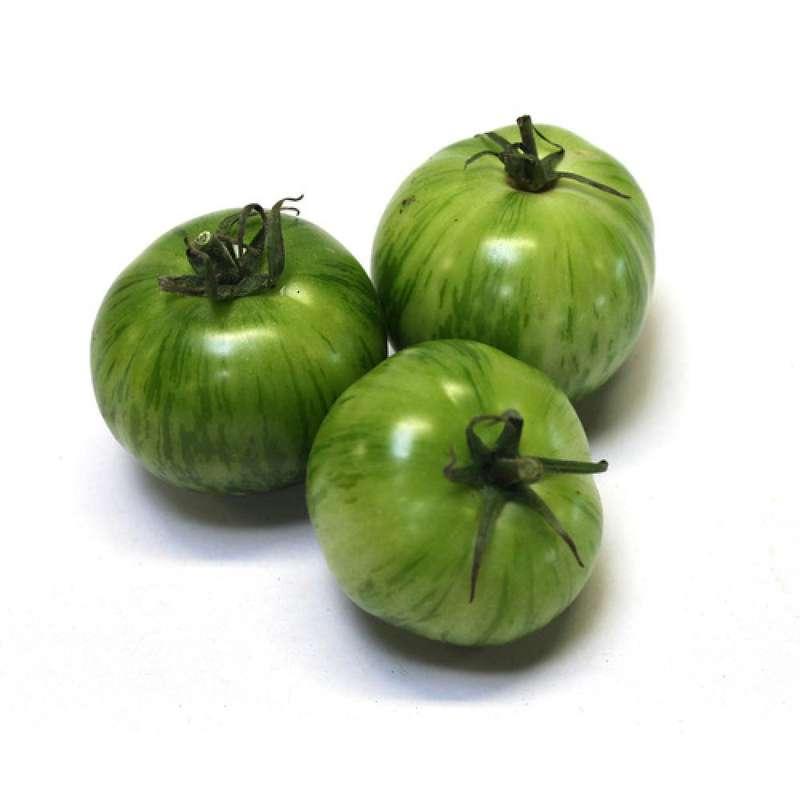 Tomates anciennes rondes vertes green zebra BIO, France