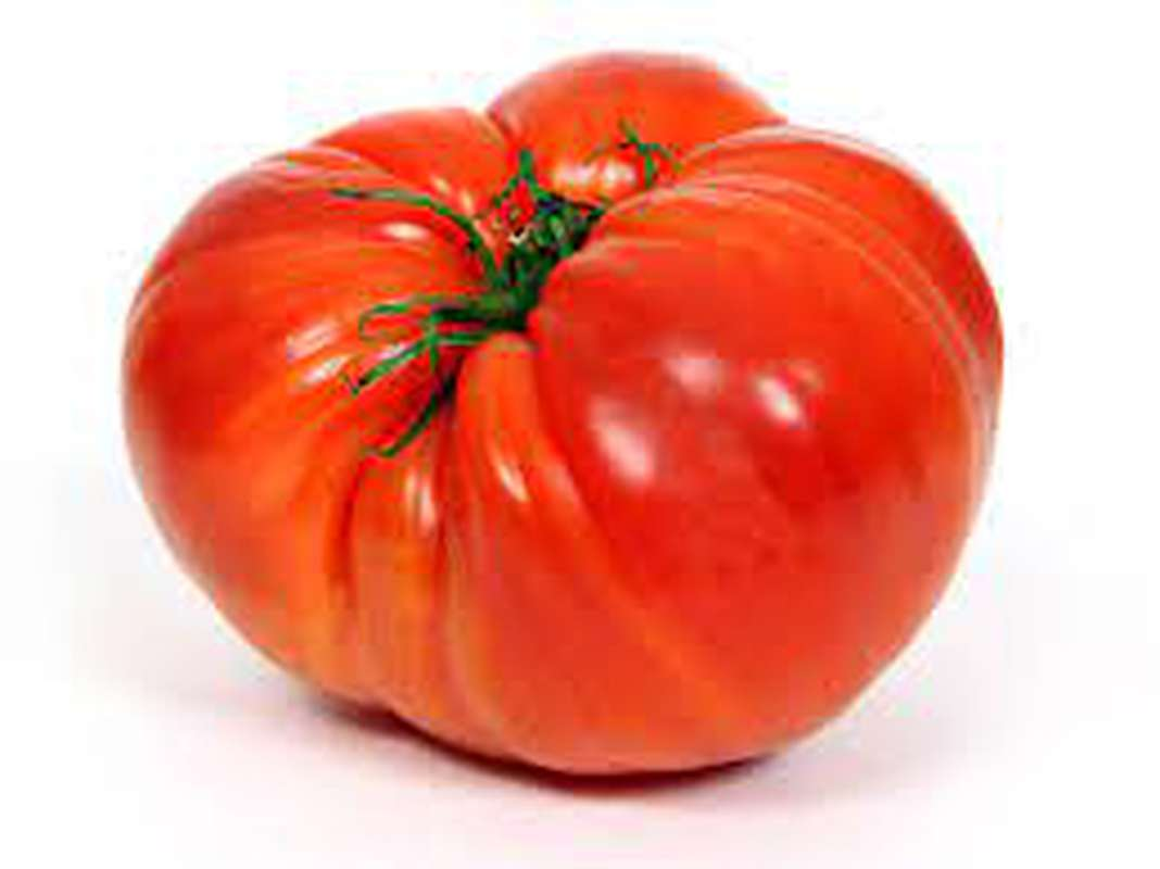 Tomates coeur de boeuf, France