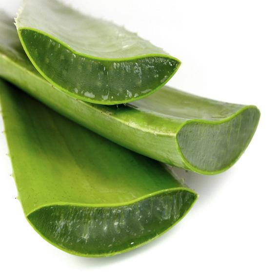 Aloe vera BIO, Espagne