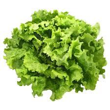 Salade batavia BIO, France