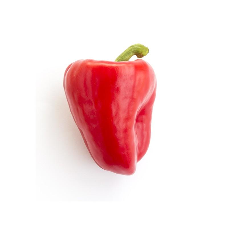 Poivron rouge BIO, Espagne