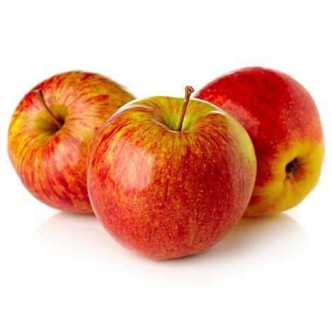 Pomme Elstar, France