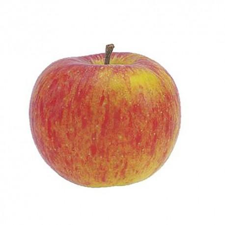 Pomme Rubinette, France