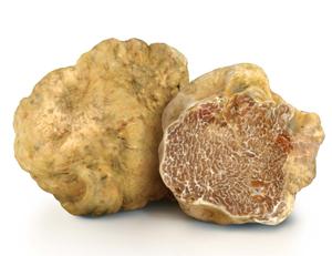 Truffe blanche d'Alba FRAICHE (13 g)