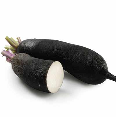 Radis noir breton BIO, France