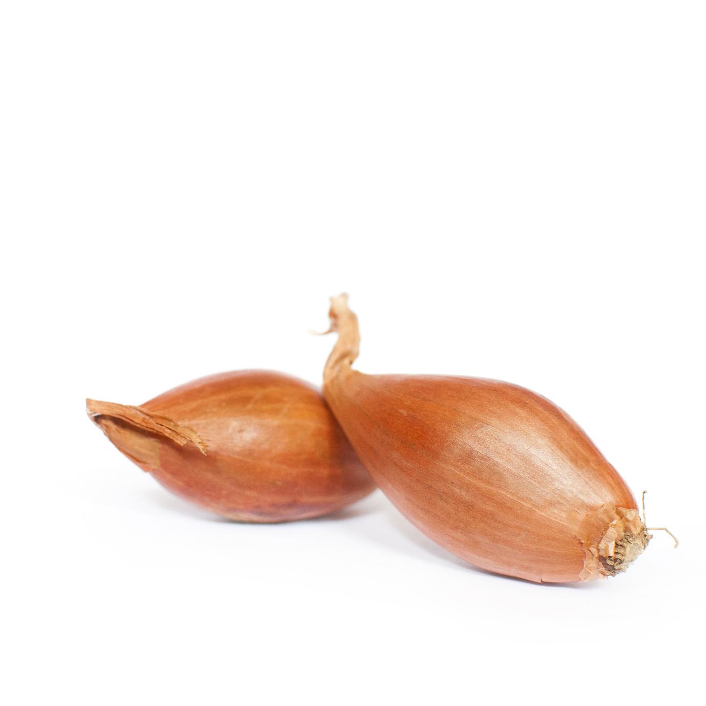 """Echalote, variété échalion """"cuisse de poulet"""""""