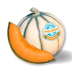 Melon Philibon délicieux (cat1 origine Fr)