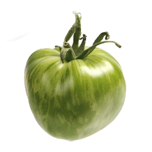 Tomate ancienne verte zebra