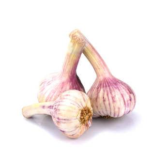 Ail frais blanc/violet Fr. BIO