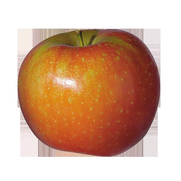 Pomme Ariane BIO (calibre petit)