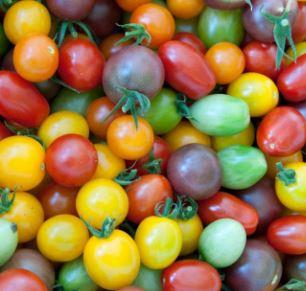 Tomate cerise multicolore Fr. BIO