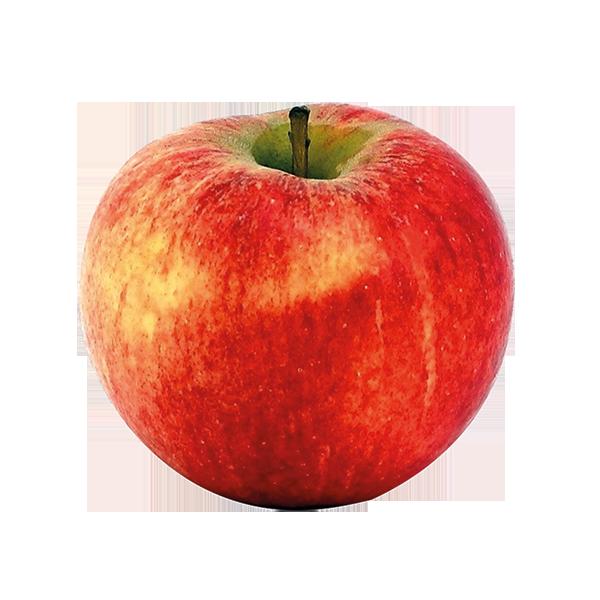 Pomme Elstar Fr. BIO (petit calibre 115 +)