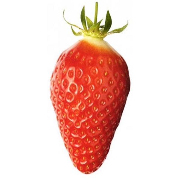 Barquette de fraises Gariguette BIO (250 g)