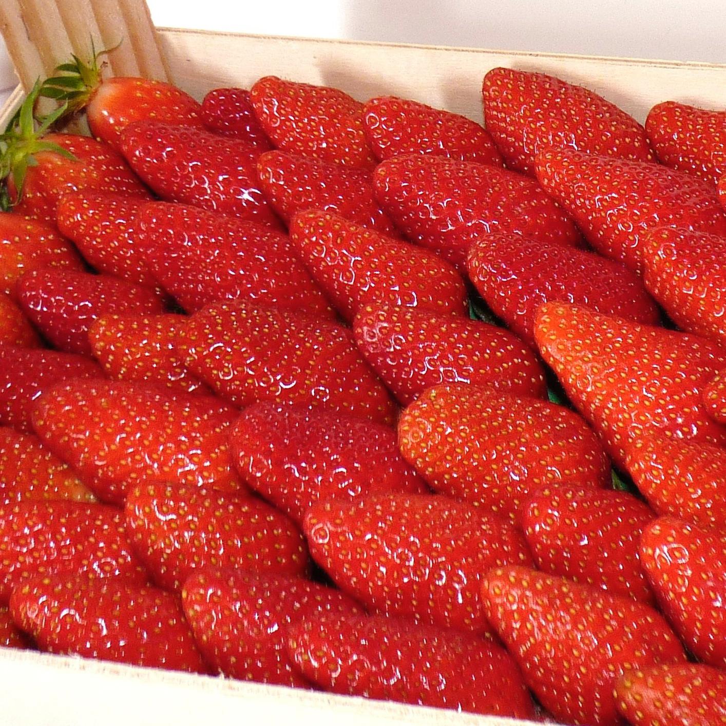 Plateau de fraises gariguette (1 kg)