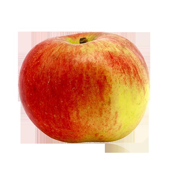 Pomme bicolore Idared BIO
