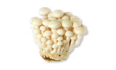 Champignon Shimeji (environ 150  g)