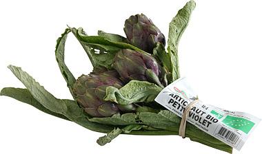 Artichaut violet poivrade Fr. CONVERSION (en bouquet)