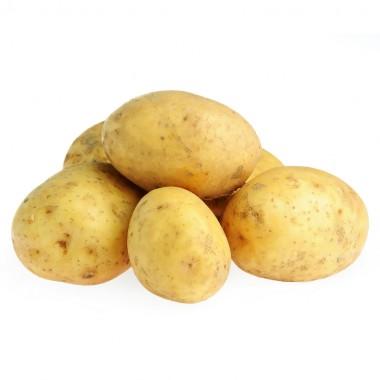 Pomme de terre (GT gros calibre) Bintje ou Trésor